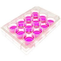 12 Well Cell Culture Plates, Sterile, Non Pyrogenic , TC treatment, 50  Pcs/ Case